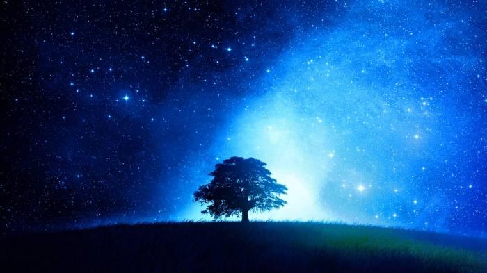 blue tree 16