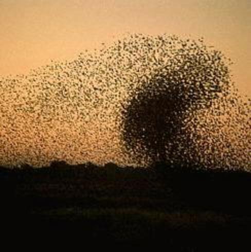 upheaval waxsbees blogspot com