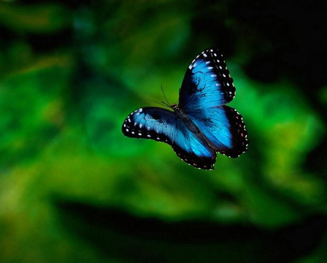 butterfly wallcoo net