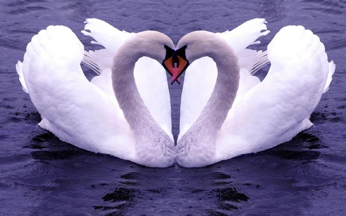 swan feelgrafix com