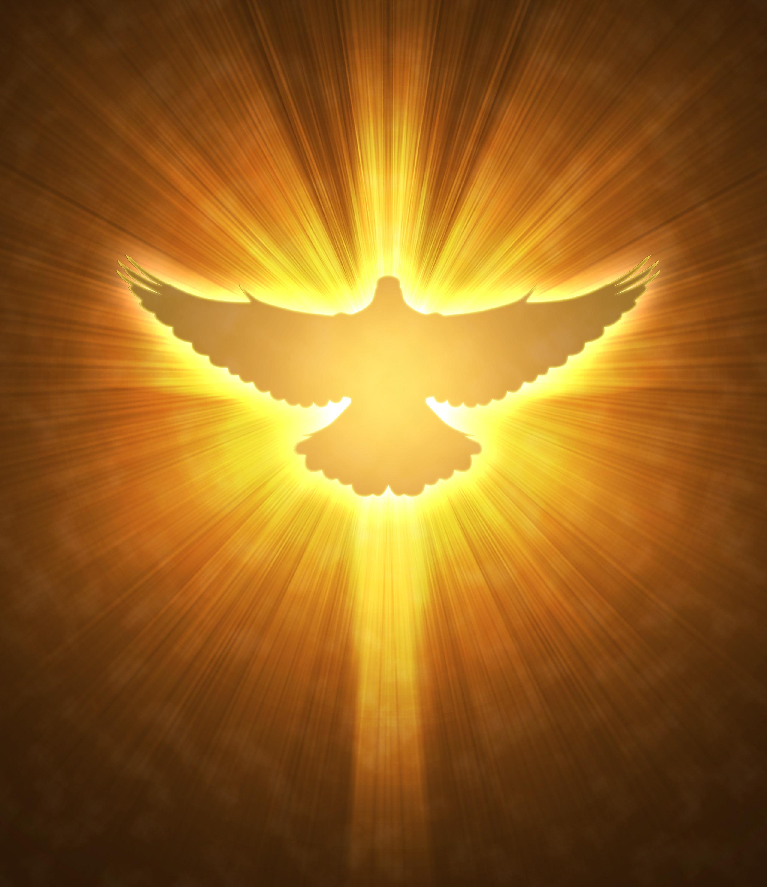 wings pinterest com 2