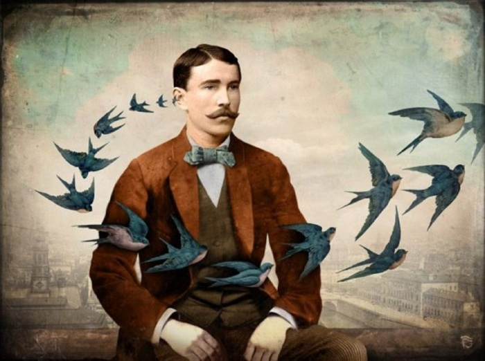 christian-schloe-swallows-set-your-heart-free