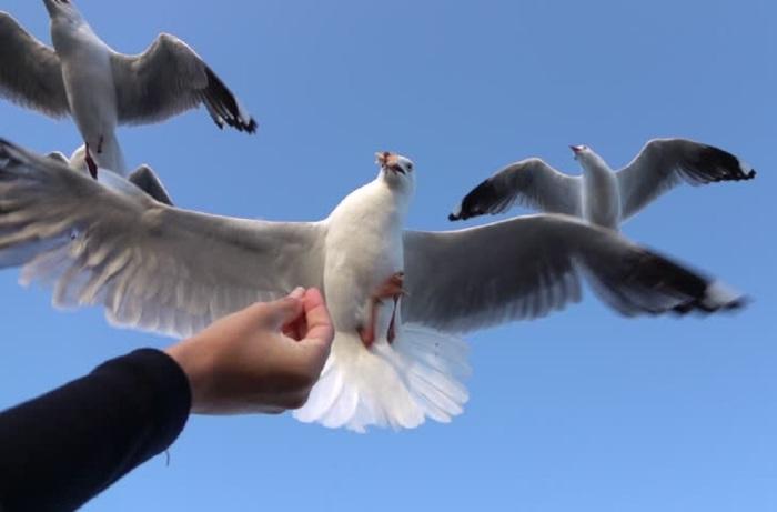 bird shutterstock com