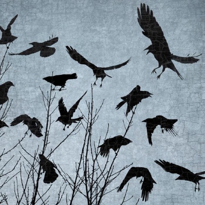 crow-dance junehunter com
